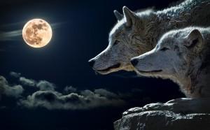 вълк 1