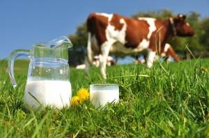 млекопроизводители