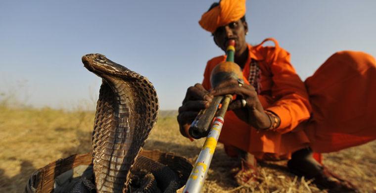 факирът и кобрата