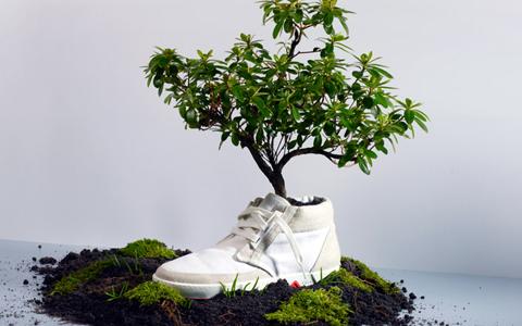 дърво в обувка