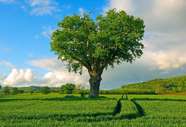 дърво сърце