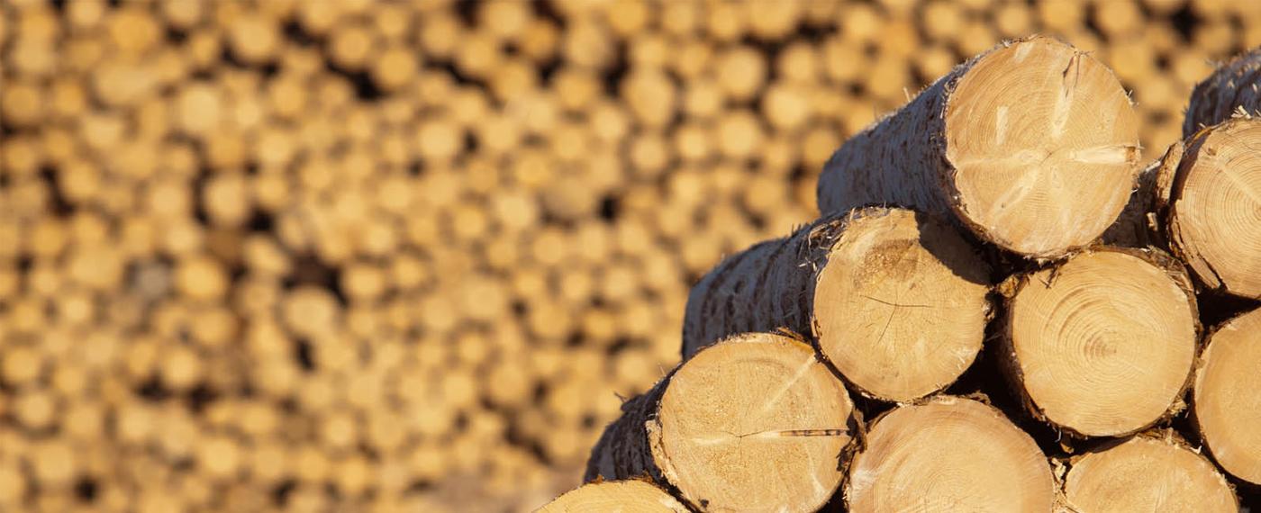 дърва за огрев