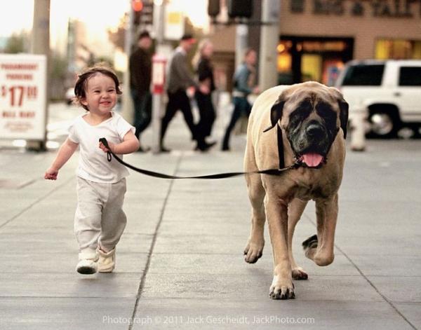 куче и дете 7
