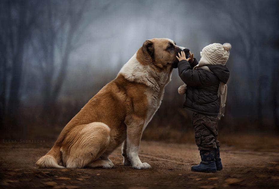 куче и дете 3