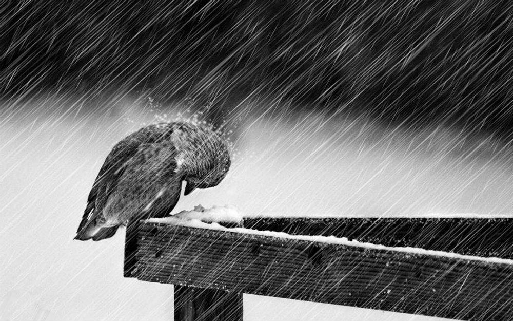 птиченце на сняг