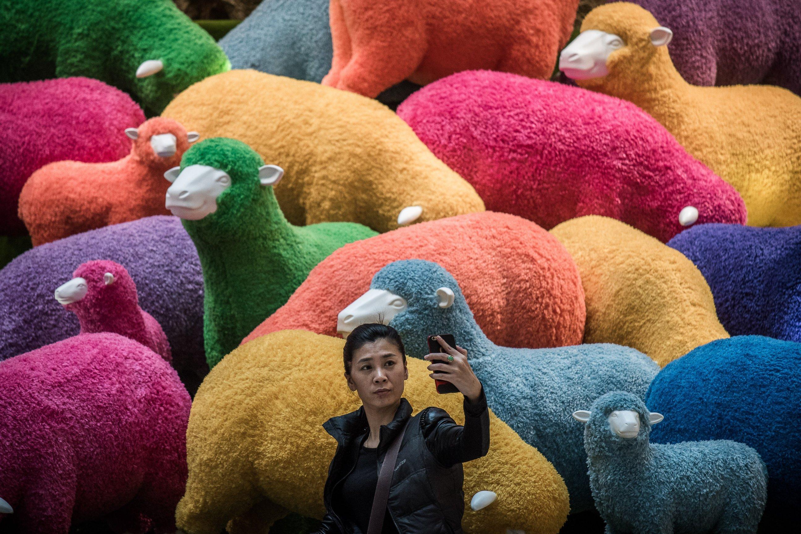 овце 1
