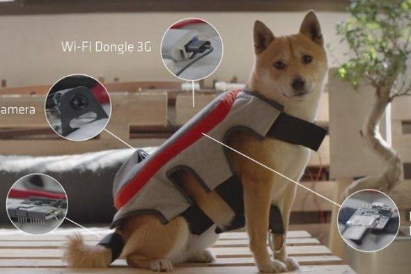 умна жилетка за кучета