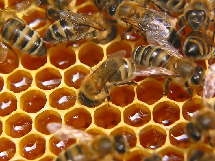 пчели 5